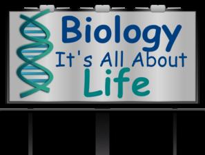 Biology clipart clip art. At clker com vector