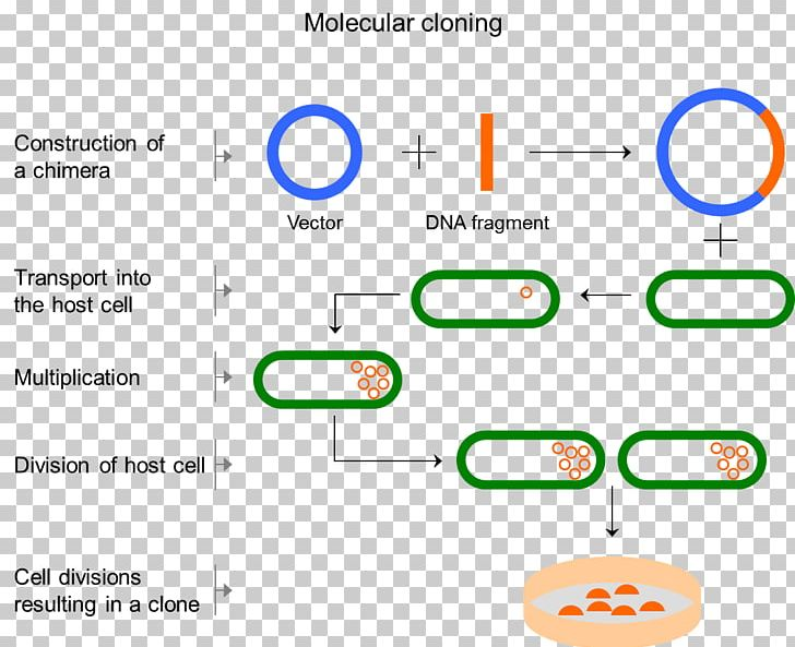 Biology clipart cloning. Molecular cell png angle