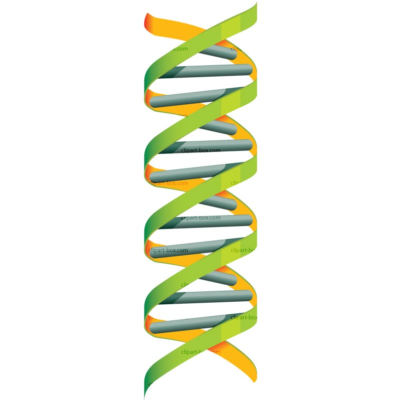 Biology clipart double helix. Dna clip art free
