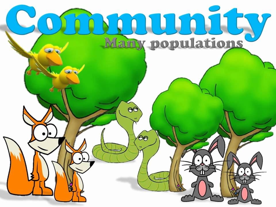 Biology clipart ecology.  collection of community