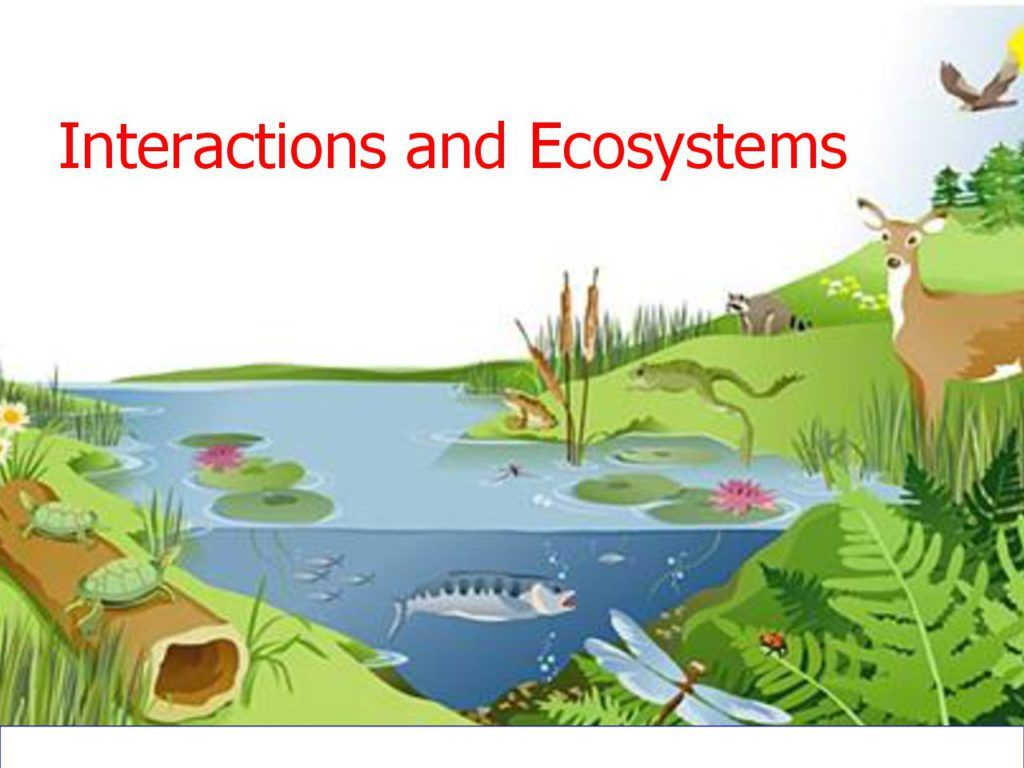 Ecosystem interactions google slides. Biology clipart ecology