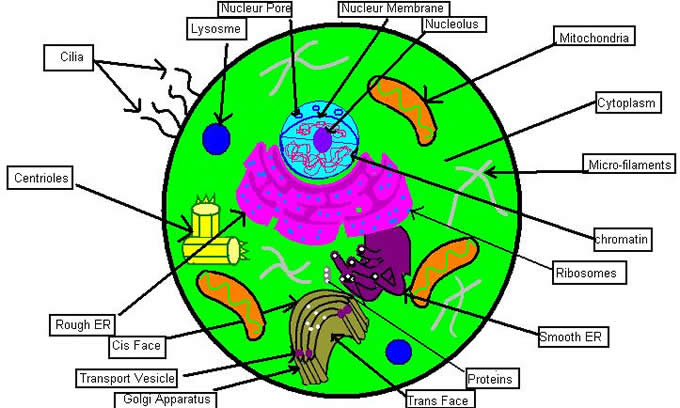 Biology clipart ecology. Useful corner worksheets also
