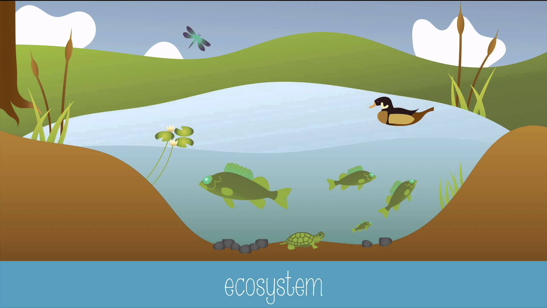Biology clipart ecology. Introduction to youtube