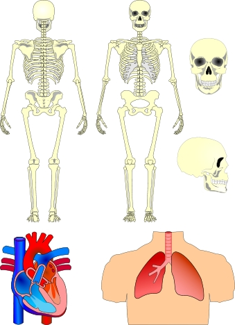 Biology clipart human anatomy. Learning connections