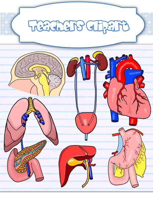 Biology clipart human anatomy.  best body clip