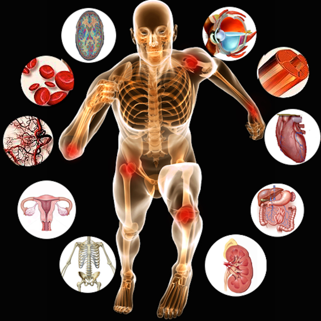 Biology clipart human physiology. Organs anatomy and pencil