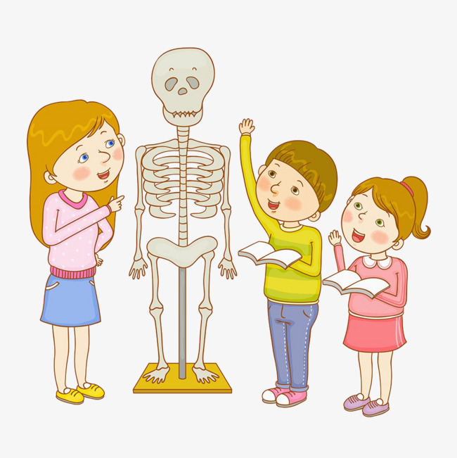 Talk about in class. Biology clipart human physiology