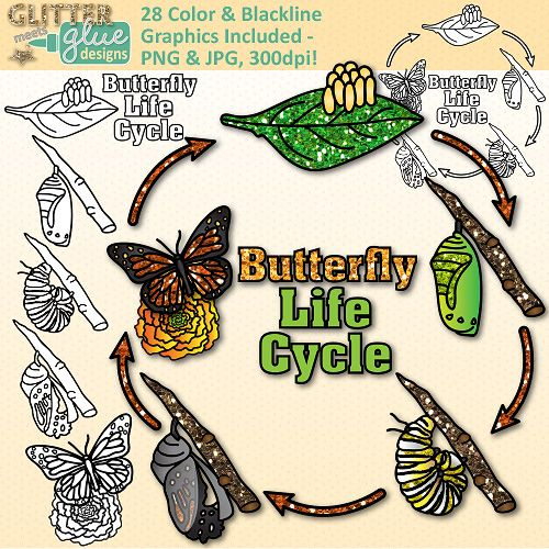 Biology clipart life science. Butterfly cycle clip art