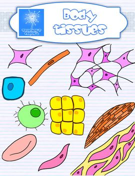 Plant and Animal Cell organelles and tissues clipart
