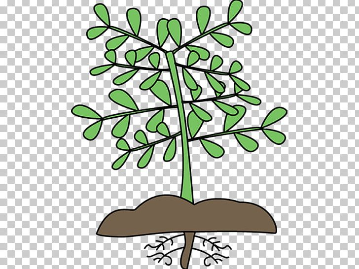 Biology clipart plant biology. Word search cell photosynthesis