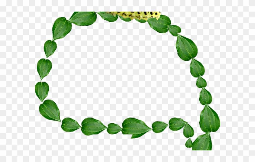 Biology clipart plant biology. Rainforest bracelet png download