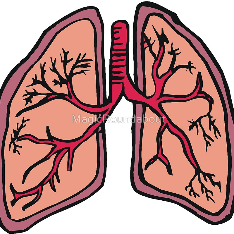 Lungs clipart respiration. Free download best