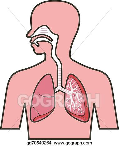 Breathing clipart respiration. Eps vector respiratory system