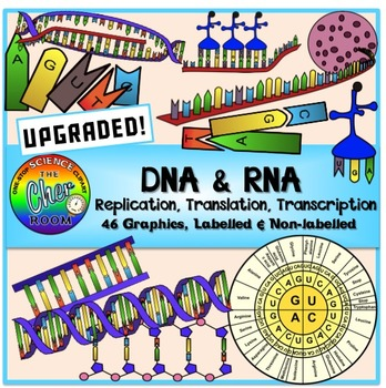 Biology clipart translation. Dna and rna by