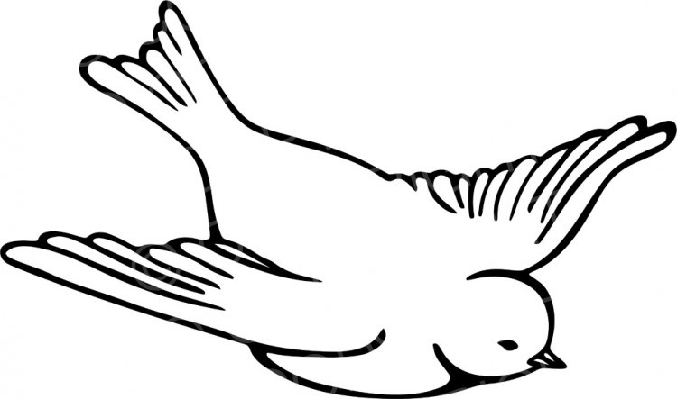 Line drawing of a. Bird clipart black and white