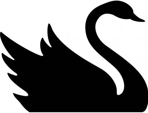 Page not found clipartbest. Birds clipart black swan