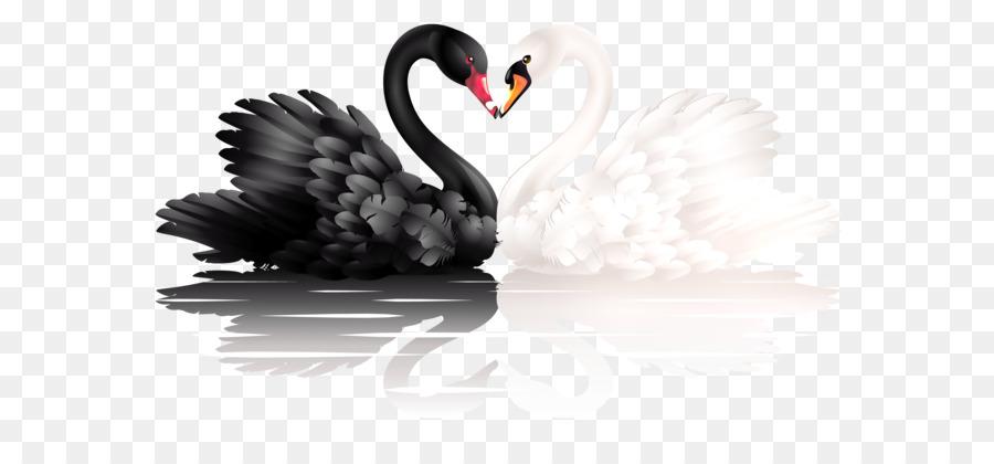 Birds clipart black swan. Clip art and white