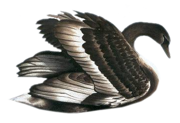 Free clip art gallery. Birds clipart black swan