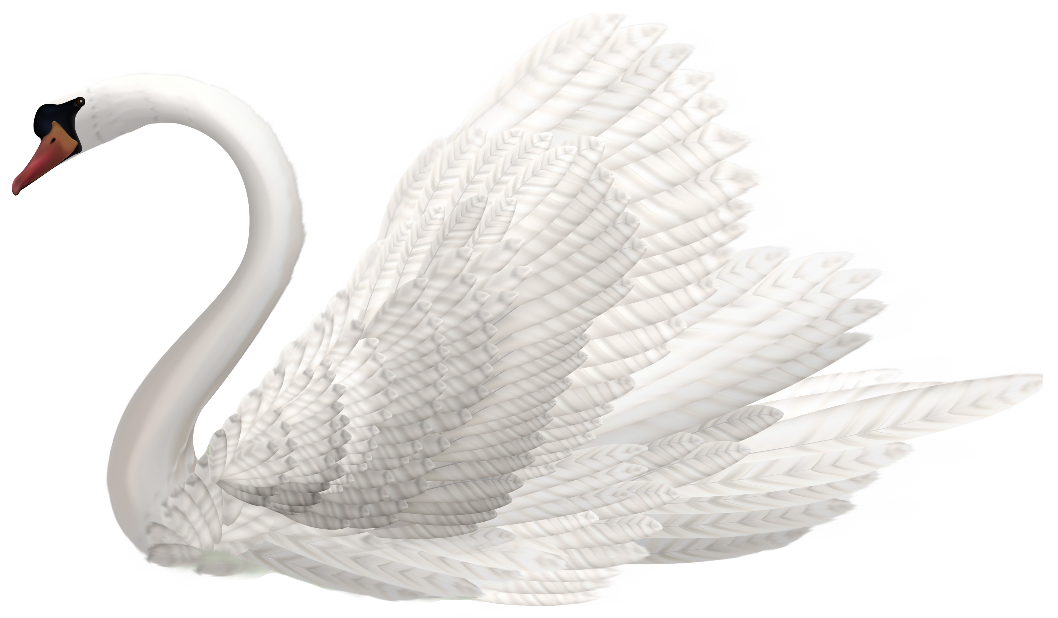 White png image best. Hearts clipart swan