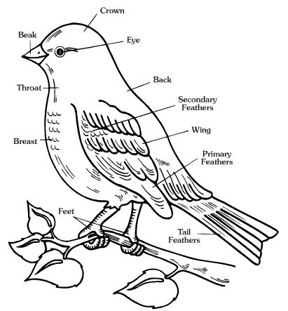 Free worksheets of animals. Clipart bird body