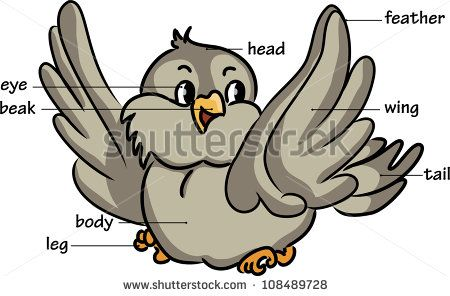 Clipart bird body. Pin on