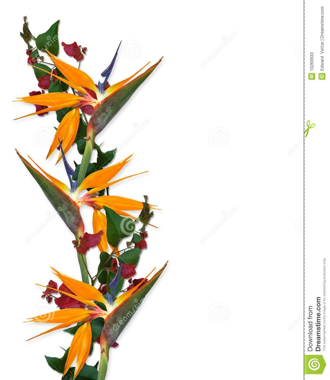 Tropical flowers border panda. Bird clipart borders