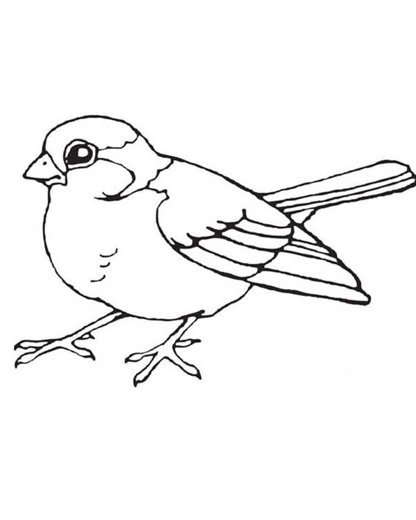 Bird clipart coloring. Birds little page theme