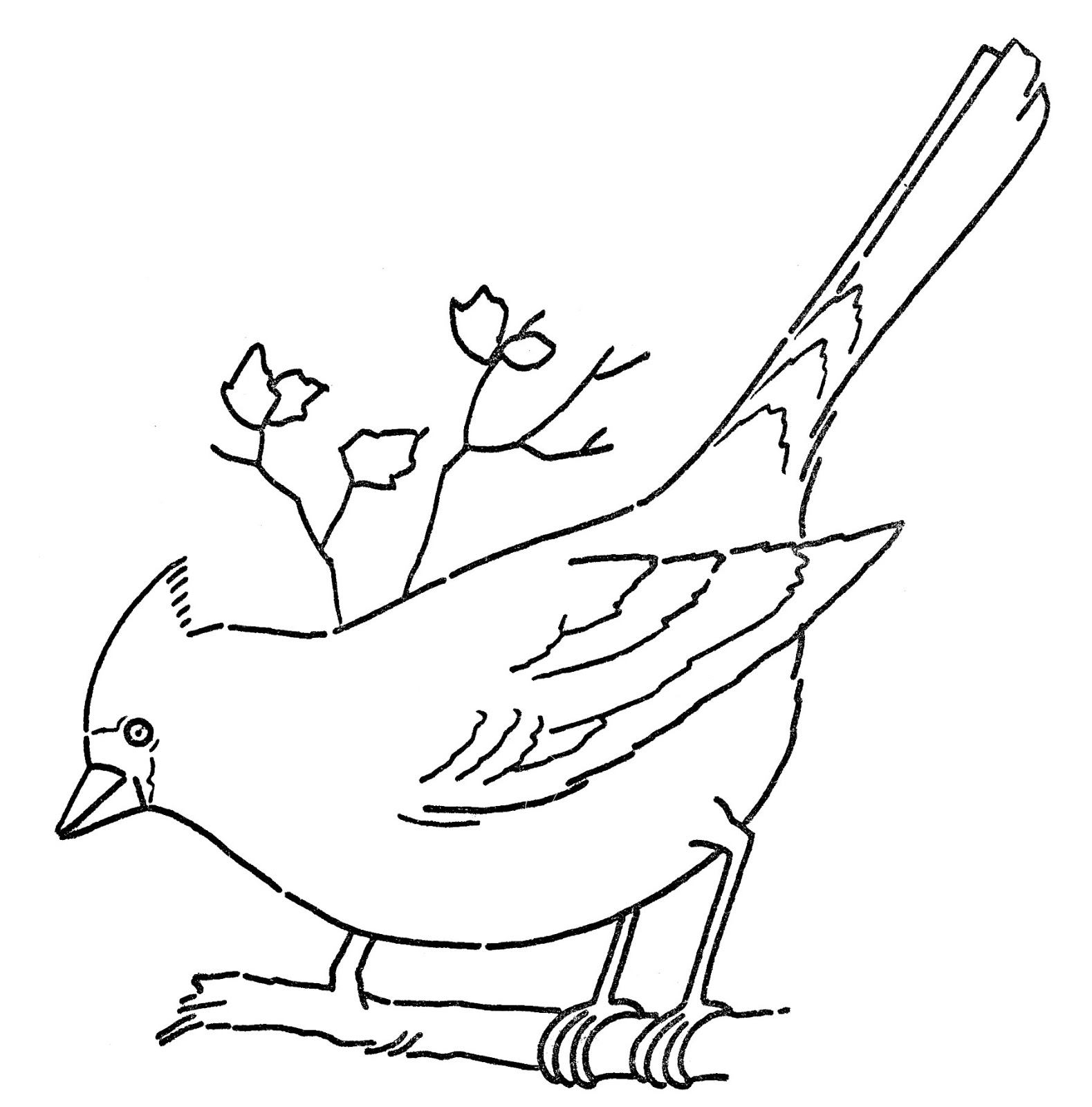 Cardinal clipart black and white. Line art coloring page