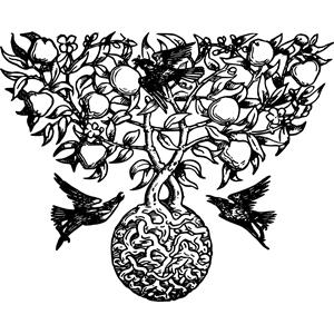 Decorative birds cliparts of. Bird clipart divider