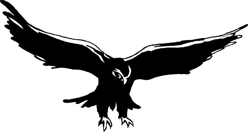 Bird . Falcon clipart hawk harris