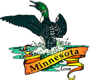 Bird clipart loon. State of minnesota the