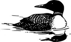 Graphics clip art google. Bird clipart loon