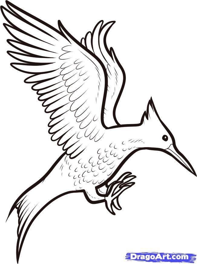 Bird clipart mockingjay. How to draw a