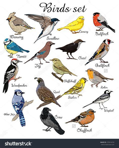 Bird logos and names. Birds clipart name