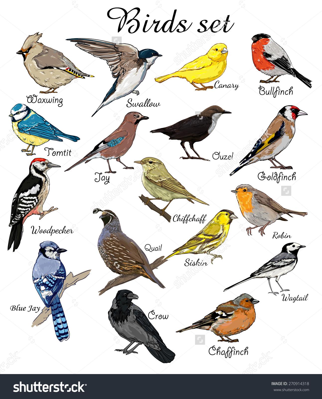 birds clipart name