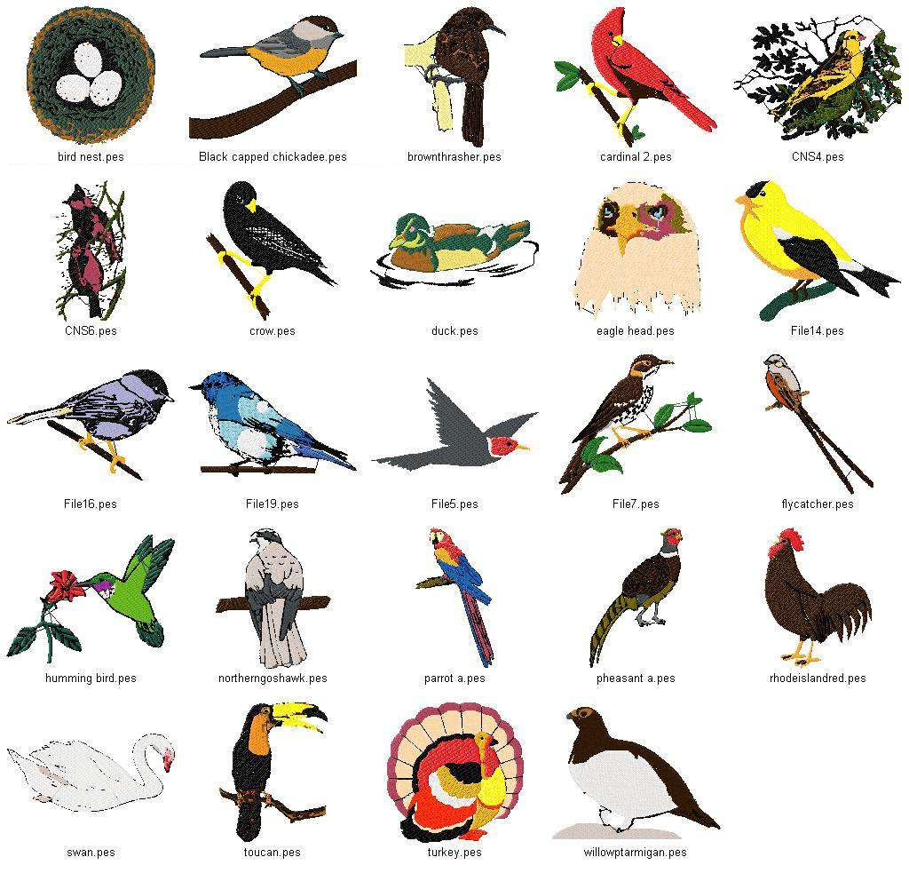 Bird and animal suitable. Birds clipart name