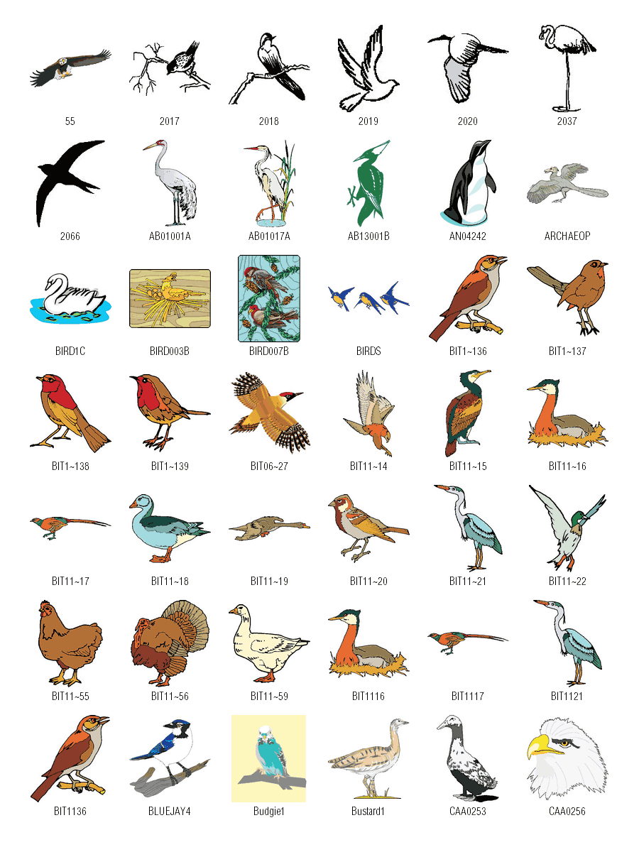 Birds clipart name. Free vector download vectorforall