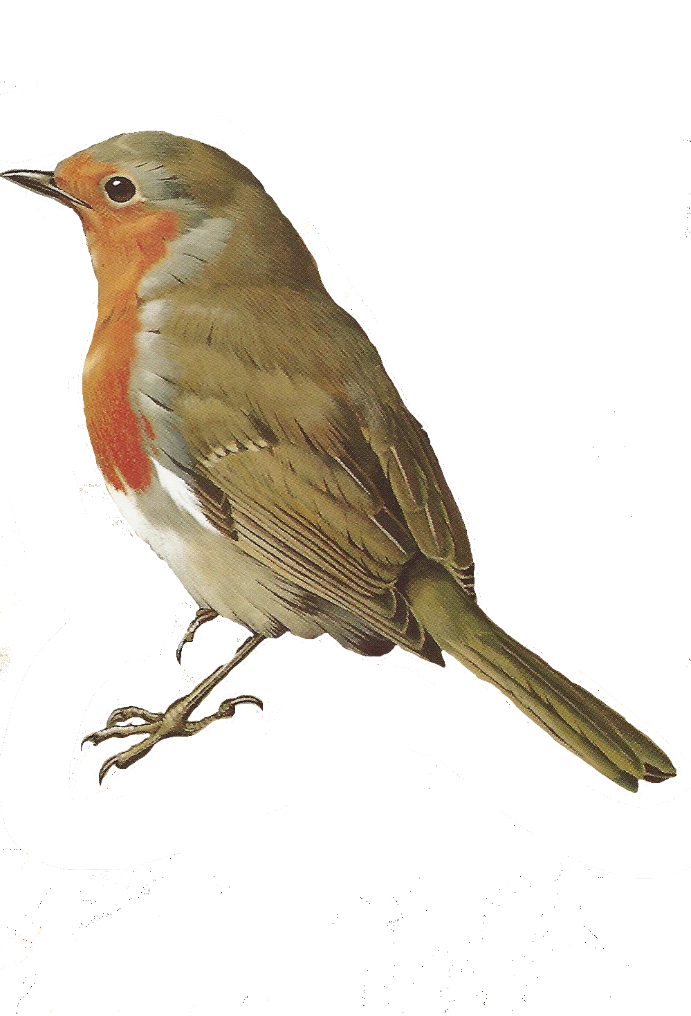 Bird clipart nightingale. Free images of birds