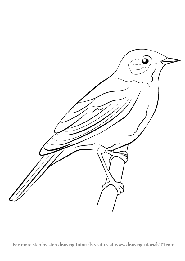 Learn how to draw. Bird clipart nightingale