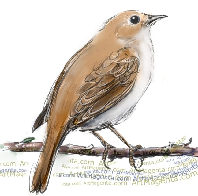 Bird clipart nightingale.  best images on