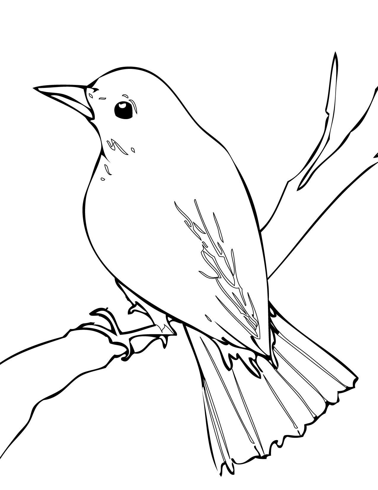 Bird drawing art pinterest. Birds clipart nightingale