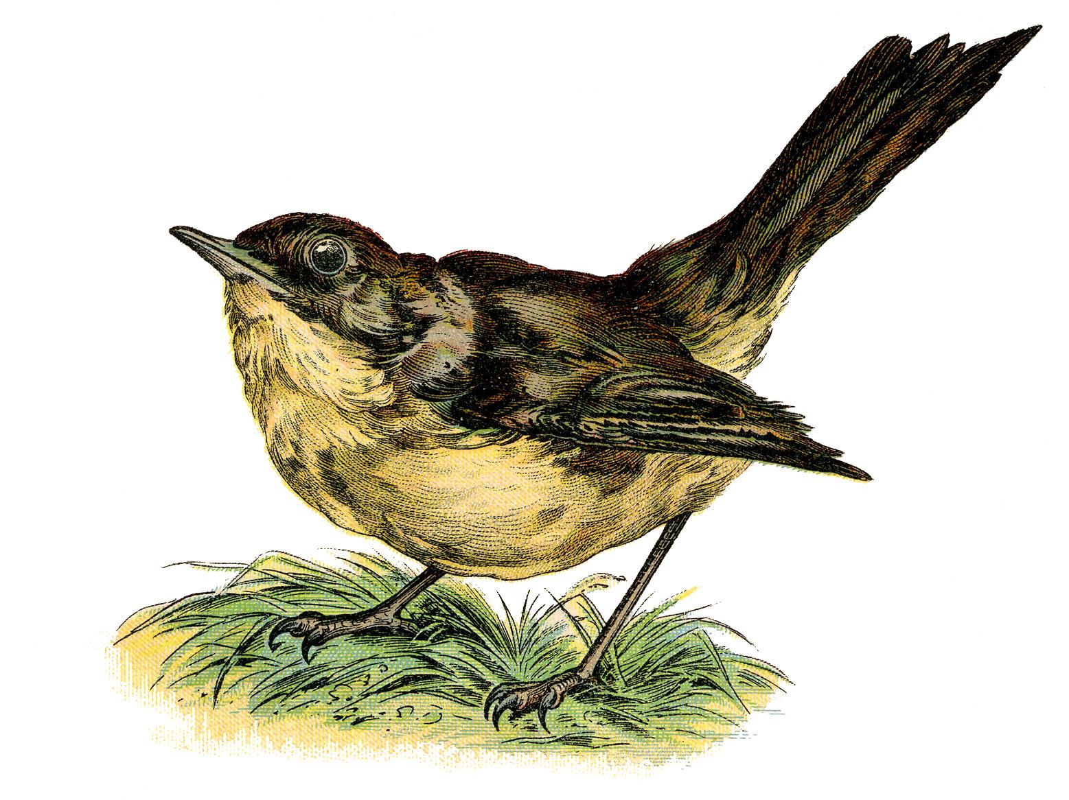 Birds clipart nightingale. Vintage clip art sweet