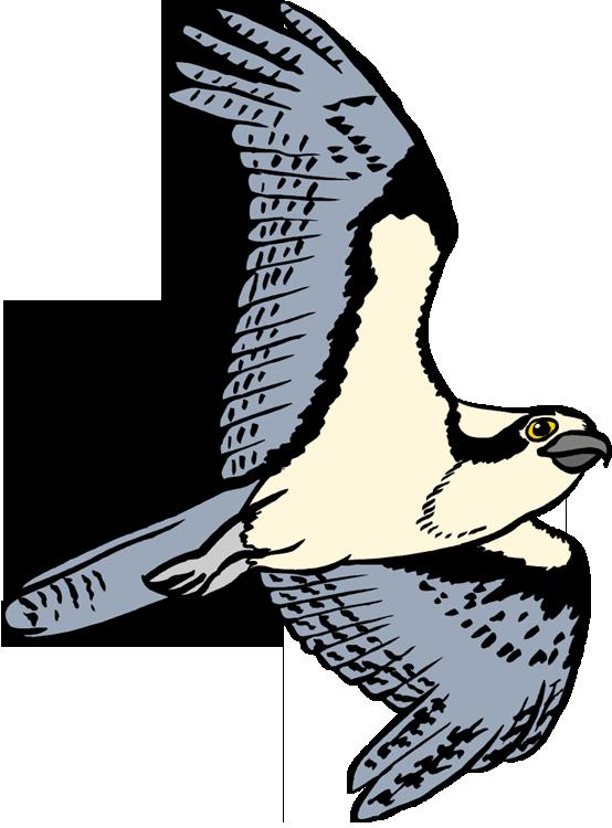Falcon clipart bird habitat. Osprey pencil and in