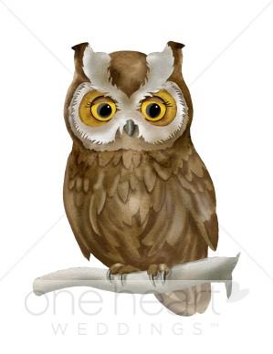 Brown love bird. Clipart owl