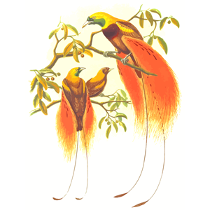Of cliparts . Birds clipart paradise
