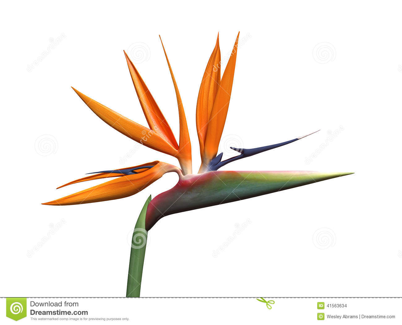 Bird clipart paradise. Of flower drawing at