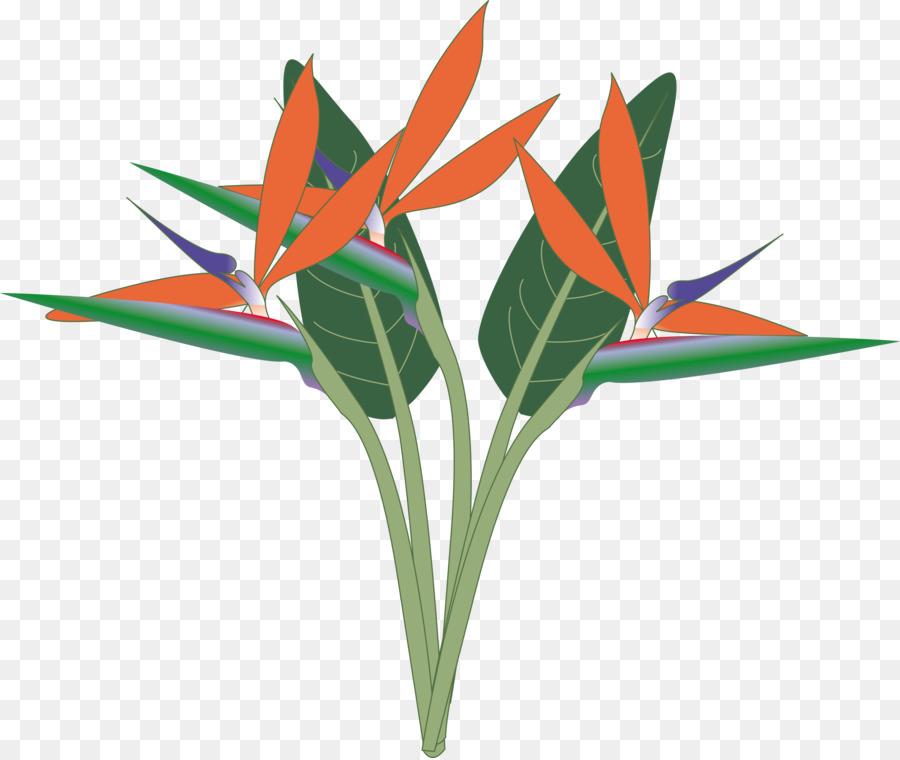 Of flower clip art. Bird clipart paradise