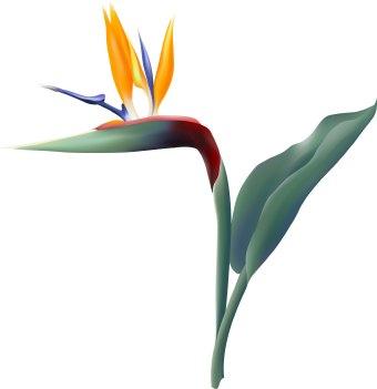 Of . Bird clipart paradise