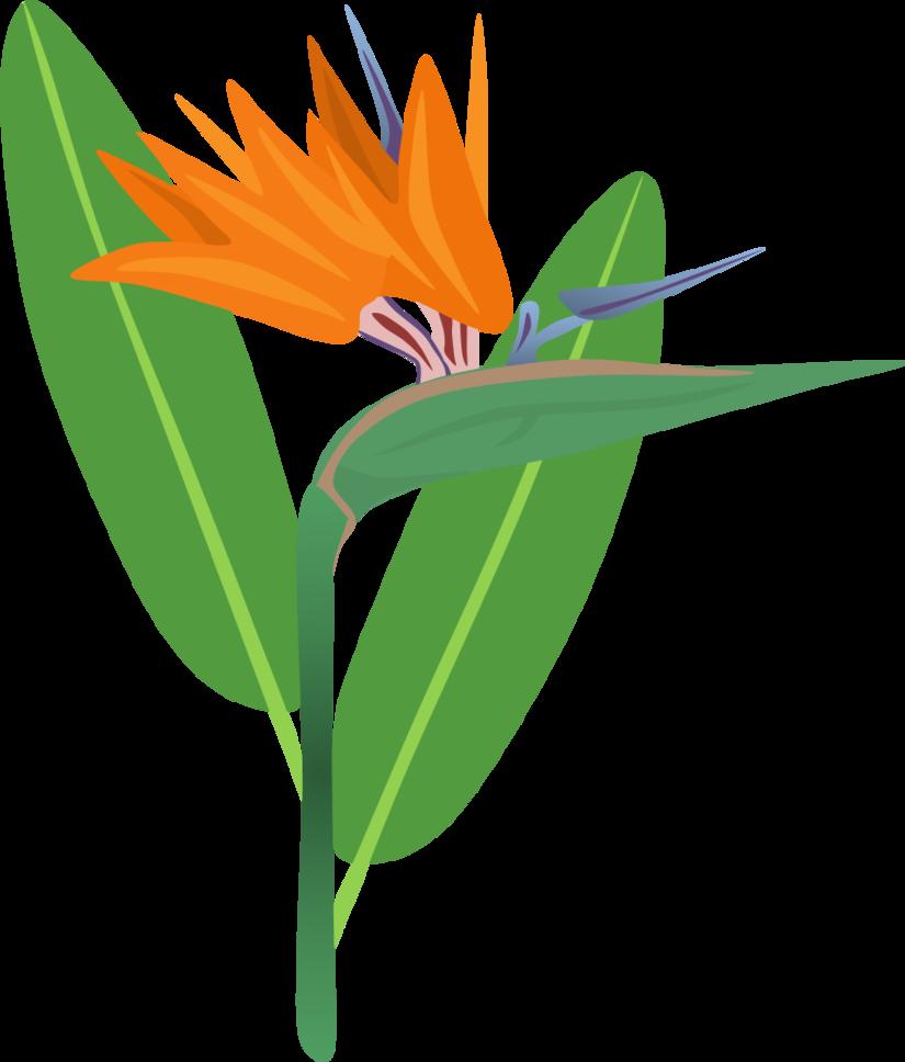 Of flower by adamzt. Bird clipart paradise