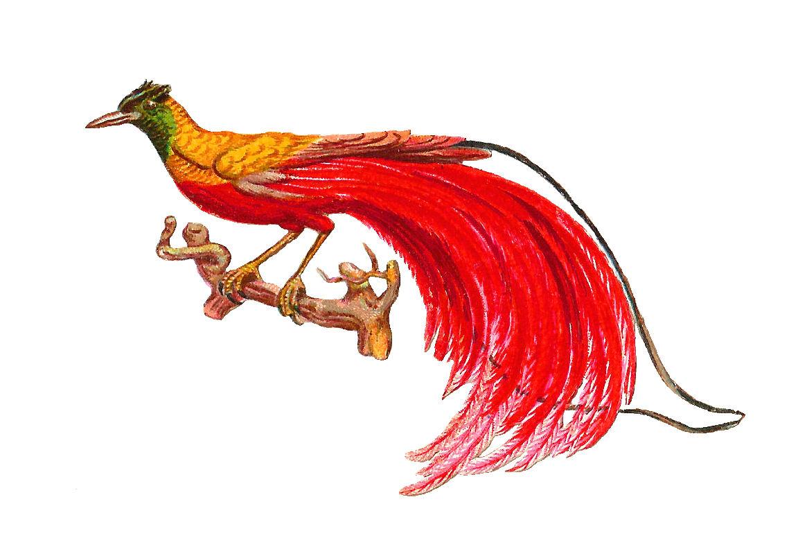 Antique images clip art. Bird clipart paradise